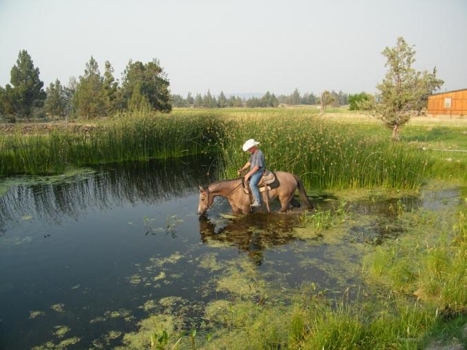 Pond-Training