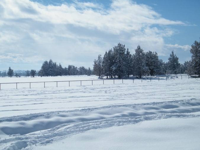 winter 2014 007